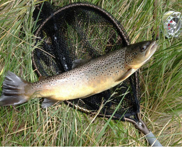 Fiskekort - Sone 7 (Lesja) i Gudbrandsdalslågen